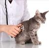 Ветеринарные клиники в Вороново